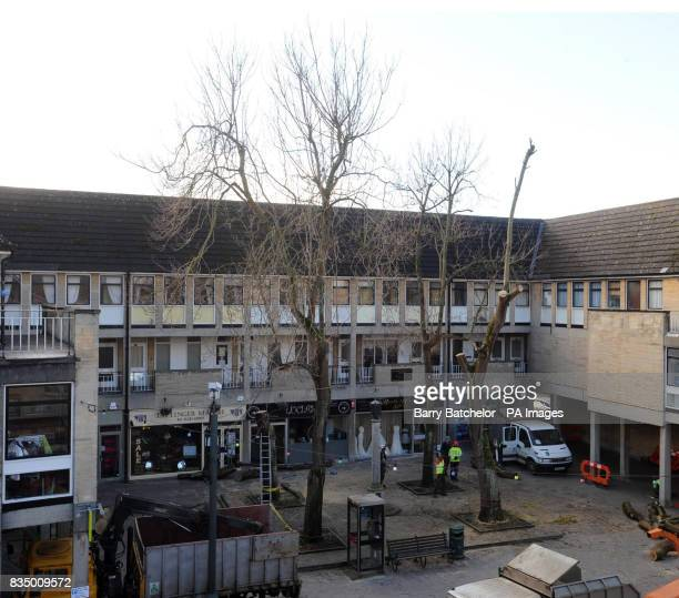 The four Catalpa trees are slowly removed in the centre of Cirencester Gloucestershire