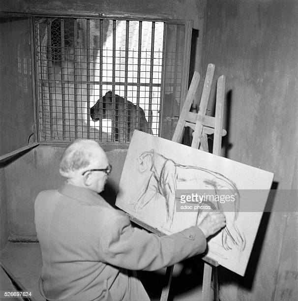 The French painter and animal sculptor Paul Jouve at Vincennes Zoo In 1949