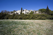 Field of daisies in front of the French village of Biot on the French Riviera