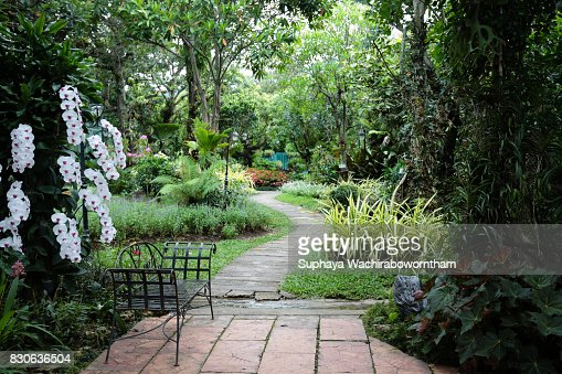 The garden is decorated in tropical jungle style for relaxation. : Stock Photo