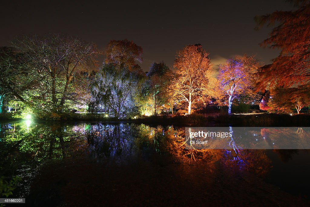 The gardens and Arboretum of Syon Park are illuminated in bright colours for their annual 'Enchanted Woodland' event on November 22, 2013 in London, England. Now in its eighth year, the Enchanted Woodland allows visitors to experience the grounds of Syon Park after dark on a trail around the eighteenth century lake and inside the Great Conservatory. The Enchanted Woodland opens on Friday, Saturday and Sunday and runs until December 8, 2013.