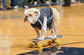 WASHINGTON DC The Georgetown Hoyas mascot rides a skateboard on the floor during a college basketball game against the Kansas Jayhawks at the Verizon...