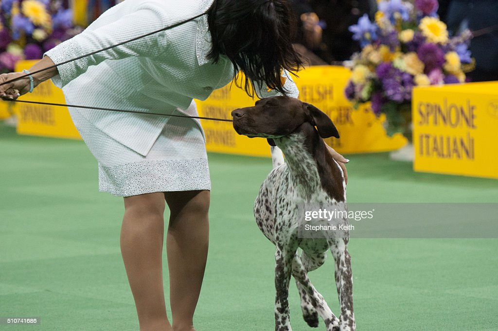 Annual Westminster Kennel Club Dog Show Getty Images