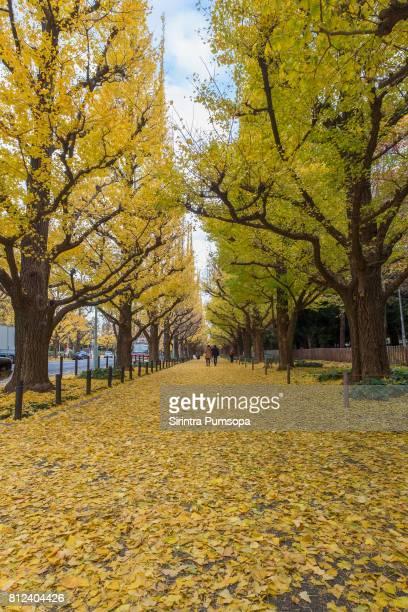 The Gingko Avenue in Meiji Jingu Gaien Park