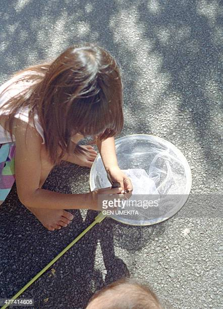 The girl catching a butterfly