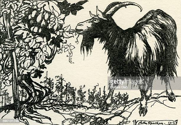 The Goat and the Vine Aesop 's Fables 1933 edition illustrated by Arthur Rackham