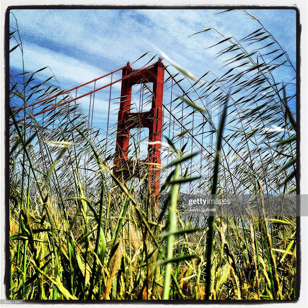 The Golden Gate Bridge is seen through tall grass on May 2, 2012 in Sausalito, California. The Golden Gate Bridge, Highway and Transportation District is preparing for the 75th anniversary of the iconic Golden Gate Bridge that will be marked with a festival on May 26 - 27 that will feature music, displays of bridge artifacts and art exhibits. The 1.7 mile steel suspension bridge, one of the modern Wonders of the World, opened to traffic on May 27, 1937.