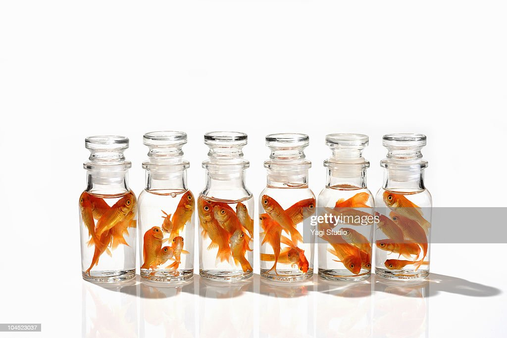 The goldfish which is in the glass container  : Stock Photo