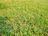 Lawn, Front or Back Yard, Formal Garden, Plant, Grass