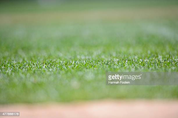 The grass is seen during the game between the Minnesota Twins and the St Louis Cardinals on June 18 2015 at Target Field in Minneapolis Minnesota The...