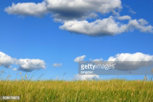 The grasslands of the blue sky and white clouds : Stock Photo
