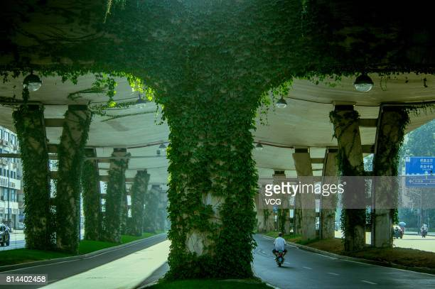 The green creepers cover the viaduct of the second ring road on July 9 2017 in Chengdu Sichuan Province of China The piers of 28kilometerlong viaduct...