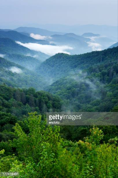 The green forests and white fog of the Smoky Mountains