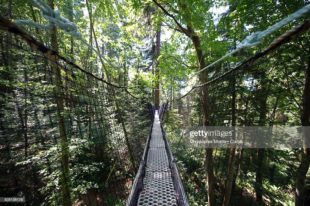 The Greenheart Canopy Walkway at UBC Botanical Garden on the c&us of the University of British & Greenheart Canopy Walkway Stock Photos and Pictures | Getty Images