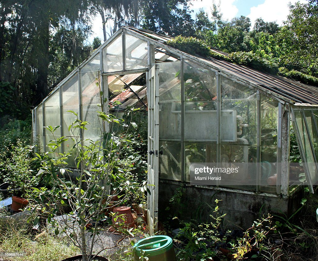 The greenhouse at Nehrling Gardens.