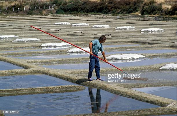 The guerande salterns classed by the Minister of environment in Guerande France on November 17 1992 Harvesting salt