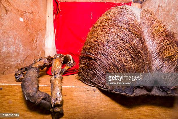 The hairy skull and the bones of some fingers of a Yeti are kept in the monastery Pangboche Gompa