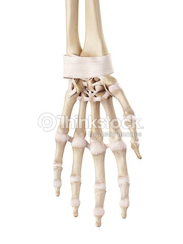 The Hand Ligaments Stock Photo | Thinkstock