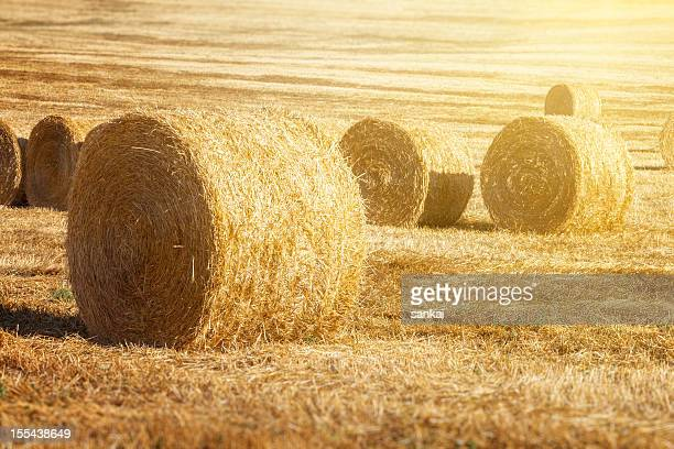 The Hayfield of Tuscany