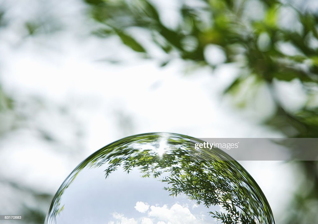The hemisphere that trees come out : Stock Photo
