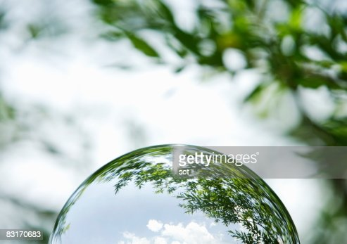 The hemisphere that trees come out : Foto de stock