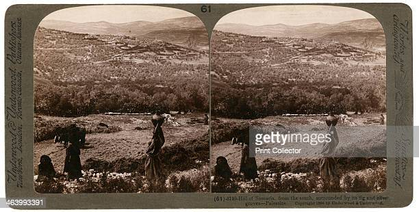 The Hill of Samaria from the south surrounded by its fig and olive groves Palestine 1900 From a series called Travelling in the Holy Land Through the...