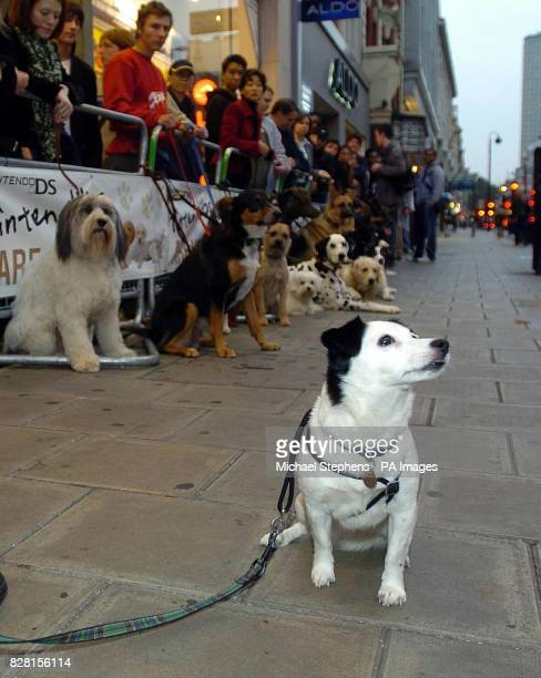 The HMV mascot Jack Russell Nipper at the front of the queue for the launch of Nintendogs a new game from Nintendo at HMV in London's Oxford Street...