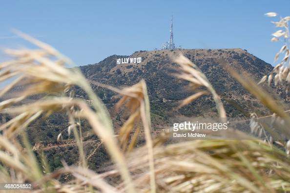 The Hollywood Sign is seen high above drying vegetation in Griffith Park on March 29 2015 in Los Angeles California A recordbreaking series of...