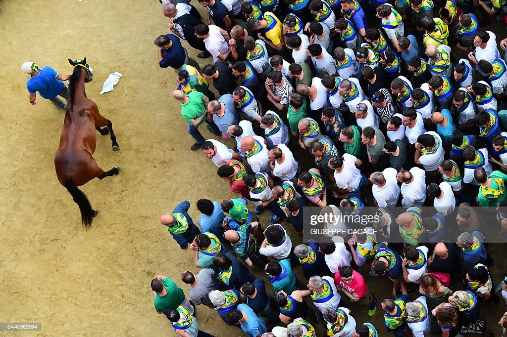 The horse of ' Contrada del Bruco' leaves the Piazza del Campoat the end of the proof-race of the historical Italian horse race of the Palio of Siena on July 1, 2016 in Siena. / AFP / GIUSEPPE