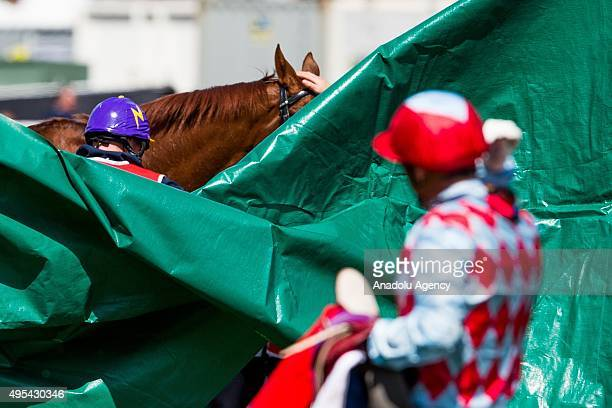 The horse Red Cadeaux which broke down near the finish line has a green screen placed around him as the horses jockey Gerald Mosse looks on during...