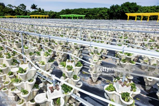 The hydroponic farm at The Girls Strawberry Patch