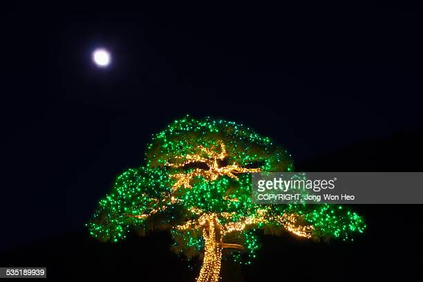 The illuminated tree under the moon