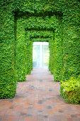 The ivy doorways