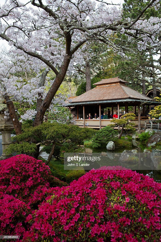 The Japanese Tea Garden at Golden Gate park was originally part of the Pan Pacific Exposition One of the craftsmen of the Japanese village Makoto...