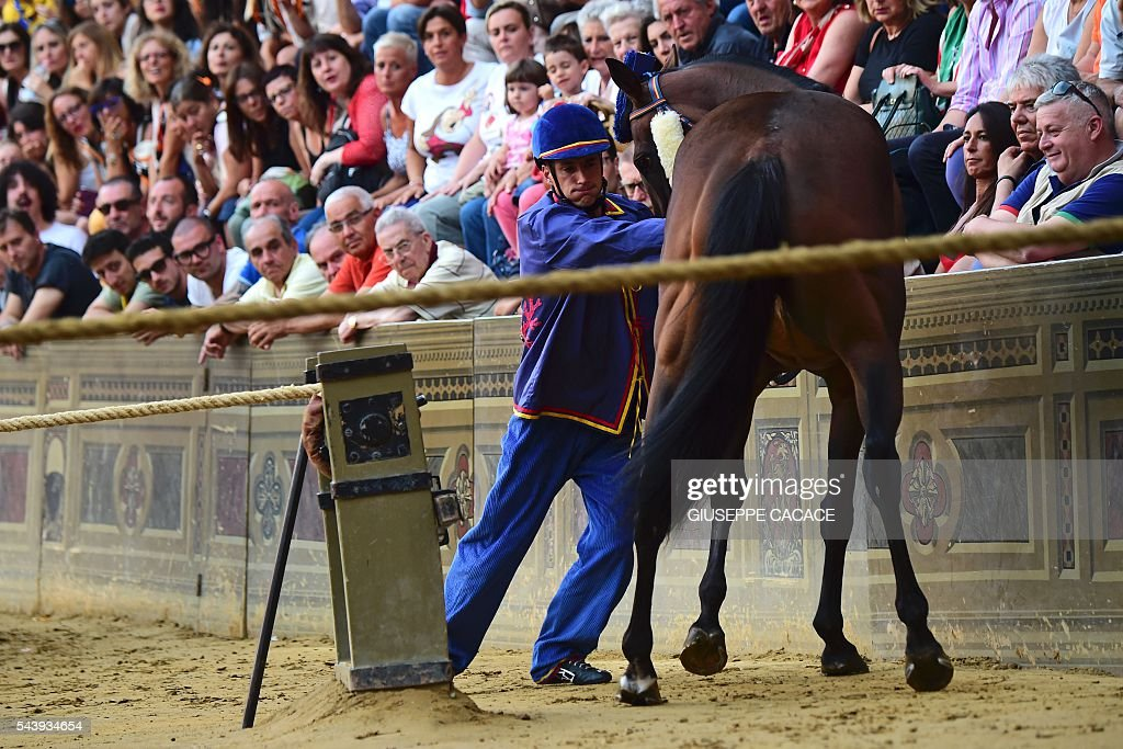 The jockey of the 'Contrada of Nicchio ' pushes his horse during a proof-race of the historical Italian horse race of the Palio of Siena on June 30, 2016 in Siena. / AFP / GIUSEPPE