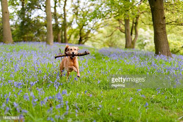 the joys of spring