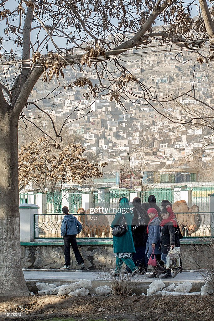The Kabul Zoo has become one of the most popular attractions anywhere in Afghanistan. Despite being no larger than a suburban U.S. high school campus, the zoo has become one of the most popular leisure attractions in all of Afghanistan - so popular in fact that ticket sales generate more money than it costs to operate the attraction.