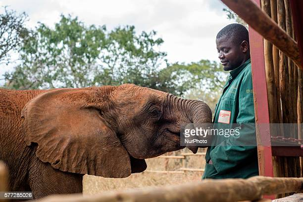 The keeper of the Elephant Orphanage Project and orphan baby elephant at the Lilayi Elephant Nursery in Lusaka Zambia on 18 July 2016 The Elephant...