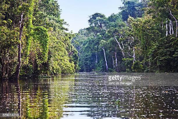 The Kinabatangan River. Sabah, Malaysia