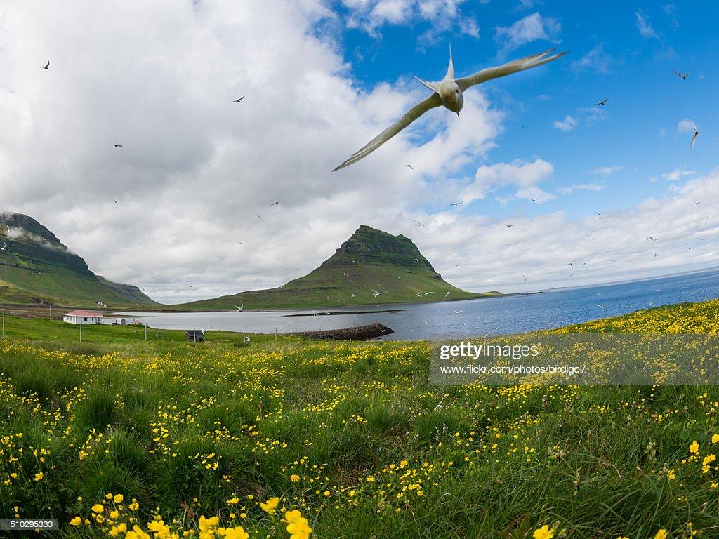 The Kirkjufell mountain