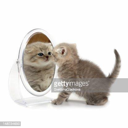 The kitten looks in a mirror : Stock Photo
