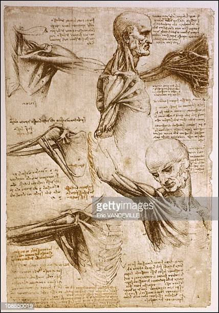 The 'La Biblioteca Leonardiana' has reproductions of all of Leonardo's manuscripts and drawings like this anatomical drawings in Vinci Italy in April...