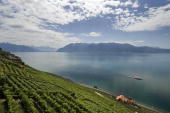 The Lake Geneva is seen from the terraced vineyards of Lavaux on July 21 2009 near Chexbres Lavaux is one of the UNESCO World Heritage Sites AFP...