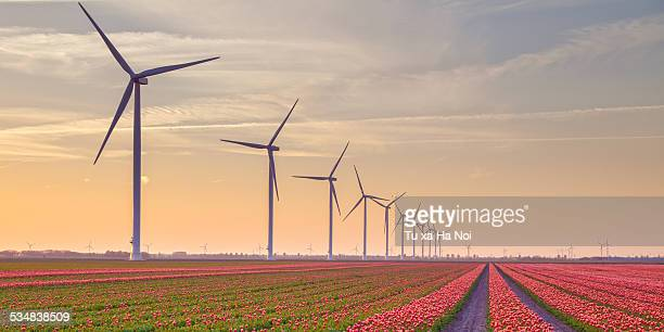 The land of tulips and wind turbines