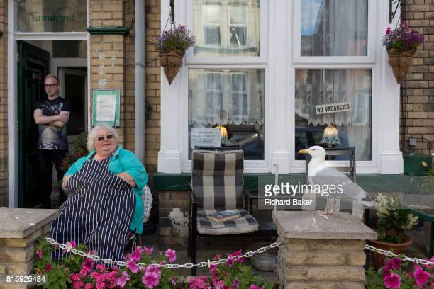 The landlady of a typical British seaside Bed and Breakfast sits outside wearing her apron while a tame seagull waits for regular titbit scraps that...