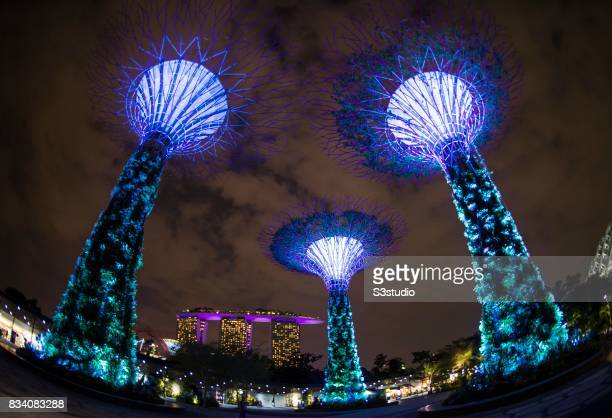 the landmark supertrees at the gardens by the bay are illuminated at night on 26 july