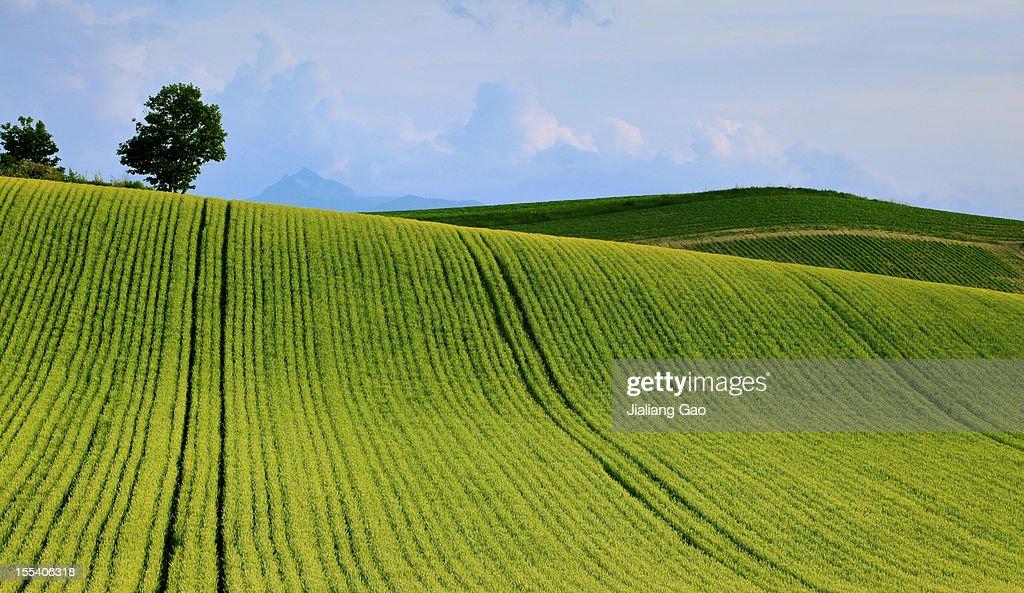 The Landscape of Furano, Hokkaido : Stock Photo