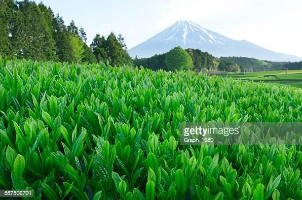 The landscape of Japan
