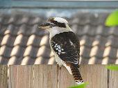 wild animal bird tropical background background textured wallpaper inspiration design Australia