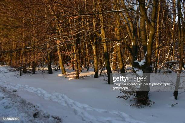 The leafy forest in winter under evening light